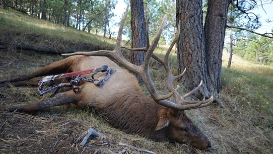 Picture of Individual - Bull Elk Bow Hunting Contest 2017